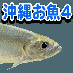 沖縄お魚4