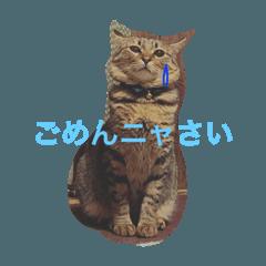 猫のすだちくん