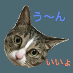こなちゃん(♀)