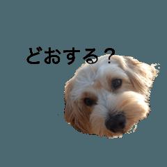 広島弁なマルプー