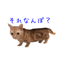 大阪弁の猫