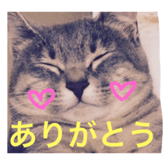 サバトラ猫 ペコちゃんのスタンプ1