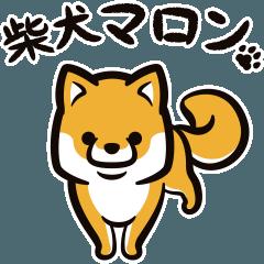 [LINEスタンプ] 動く!柴犬マロン (1)