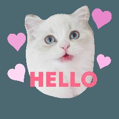 Joy kitty