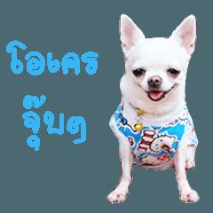 Chihuahua doggy V.1
