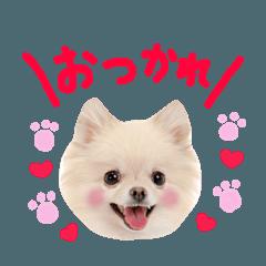 かわいい犬たち♡よく使う言葉集 決定版!