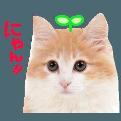 かわいい猫♡