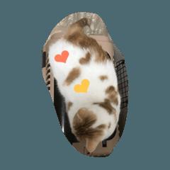 ハートマークがある猫
