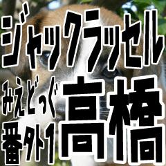 [LINEスタンプ] みえどっぐ ジャックラッセル 高橋さん編
