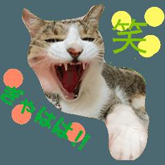 猫のきなこと仲間たち