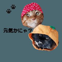 kyaranatufamily 挨拶日常編