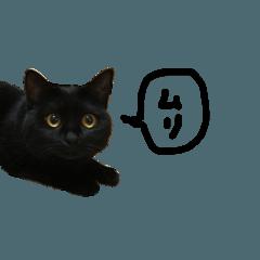 猫のおはぎちゃん