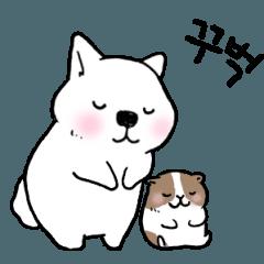 動く▷わんことモルの韓国語 その2