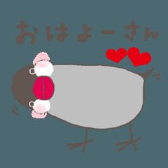 関西弁の桜文鳥