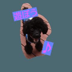 愛犬ミッキーの日常使える激かわスタンプ