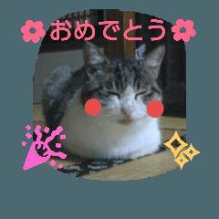 びち びち、という名のネコ