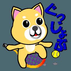柴犬のテニス