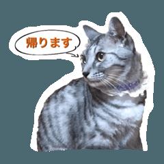 ぼんちゃん(チム)1.1