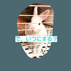 ウサギのモアちゃんのウキウキティータイム