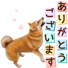 [LINEスタンプ] さすが!柴犬【万能型】 (1)