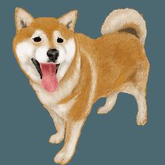 [LINEスタンプ] 柴犬!の道
