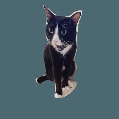 DODO cat life