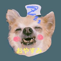 愛犬ラムちゃん