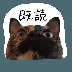 猫村家のネコ