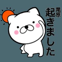 【尾原】が使う主婦が作ったデカ文字ネコ