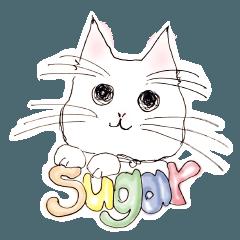 甘猫シュガー