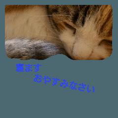 Cat.Cat!goodnight