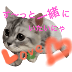Moca@cat 癒し系スタンプ
