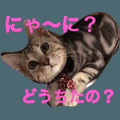 Minto@cat 癒しスタンプ