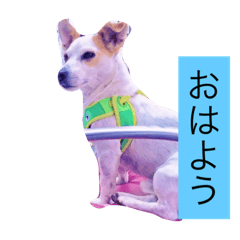 kokodog
