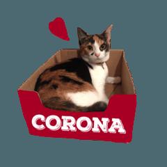 わがまま猫のコロナ