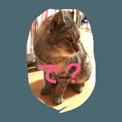 うちの のら猫