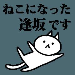 猫になった逢坂