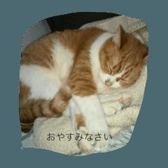 かわいい猫だらけ