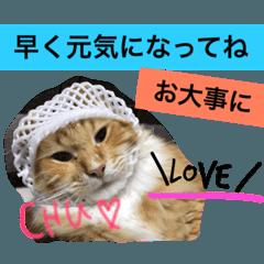 西田家の猫たちbyAOI