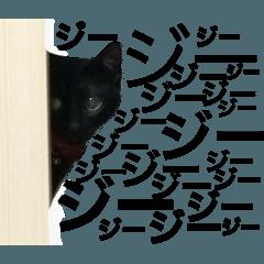 ★猫と久留米弁★ネーロVer.★