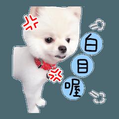 Ball puppy