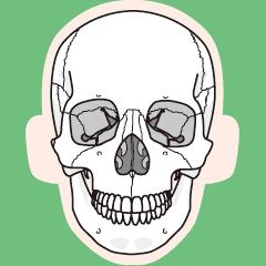 人体の骨格