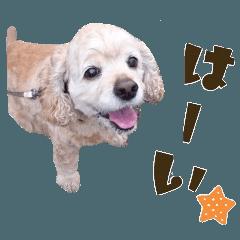わんこ(アメコカ)すたんぷ 2