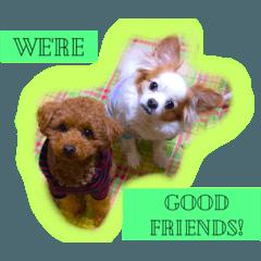 Chikuwa and Maru are good friends!