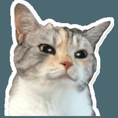 猫のスコさん。4
