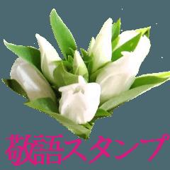 KiKi' Flower garden 3