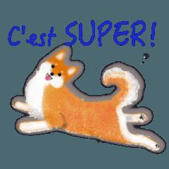 柴犬 フランス語