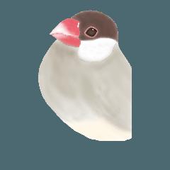 [LINEスタンプ] 文鳥、桜文鳥、白文鳥、シナモン文鳥。