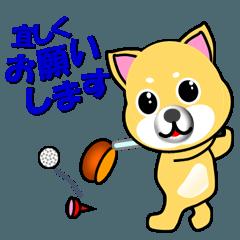 柴犬のゴルフ