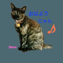 Nana&Nene 2